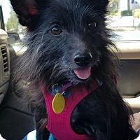 Adopt A Pet :: TILLY - Terra Ceia, FL