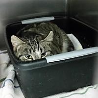 Adopt A Pet :: Camille - Chippewa Falls, WI