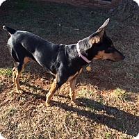 Adopt A Pet :: Kenta - Salisbury, NC