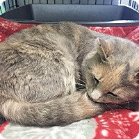 Adopt A Pet :: Dusty - Tioga, PA