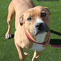 Adopt A Pet :: Arlen - Godfrey, IL