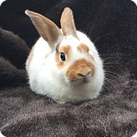 Adopt A Pet :: Jeepers - Watauga, TX