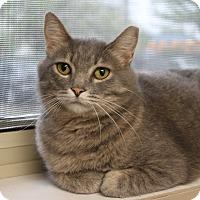 Adopt A Pet :: Sunshine - Naperville, IL