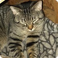Adopt A Pet :: Olaf - Oviedo, FL