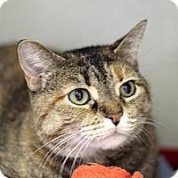 Adopt A Pet :: Alyssa Micelli - Chicago, IL