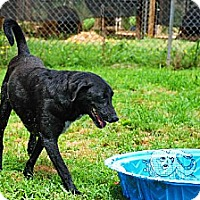 Adopt A Pet :: John Brown - Elizabeth City, NC