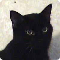 Adopt A Pet :: AA-Skittles - Tyler, TX