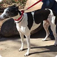Adopt A Pet :: AMF Bouncing Ball - Knoxville, TN