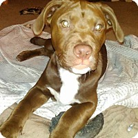 Adopt A Pet :: Jake - San Diego, CA