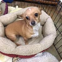 Adopt A Pet :: SADIE - Elk Grove, CA