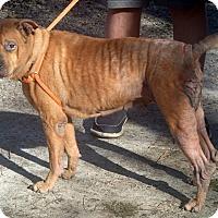 Adopt A Pet :: Shelly - Newport, NC