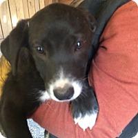 Adopt A Pet :: Bammer - Hohenwald, TN