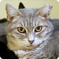 Adopt A Pet :: Poppy - Atascadero, CA