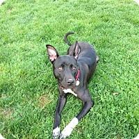 Adopt A Pet :: April - Northville, MI