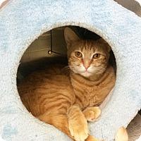 Adopt A Pet :: Bayou - East Brunswick, NJ