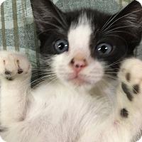 Adopt A Pet :: Twix - Monroe, GA