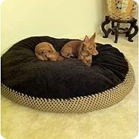 Adopt A Pet :: Adonis and Zeus - Alexandria, VA