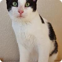 Adopt A Pet :: Rio - Fredericksburg, TX