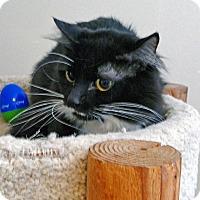 Adopt A Pet :: Daniel - Victor, NY