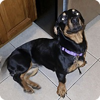 Adopt A Pet :: Princess - Nanuet, NY