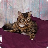 Adopt A Pet :: Antonio - Tomball, TX