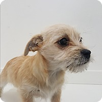 Adopt A Pet :: Tennessee Jed - Valencia, CA