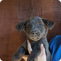 Adopt A Pet :: Maxwell - Oviedo, FL