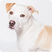 Adopt A Pet :: Baby Girl - Apache Junction, AZ
