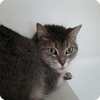 Adopt A Pet :: Bianca - Reisterstown, MD