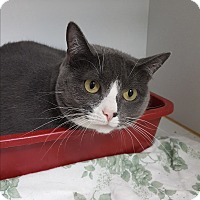 Adopt A Pet :: Clair - Middletown, NY