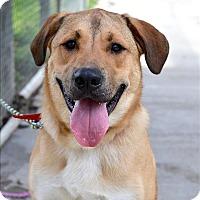 Adopt A Pet :: Huxley - Delaware, OH
