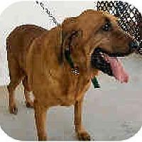 Adopt A Pet :: Anna Belle-HOLD - Phoenix, AZ