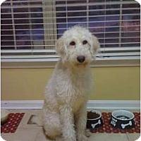 Adopt A Pet :: Marley - Alexandria, VA