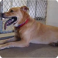Adopt A Pet :: Lucky - Winter Haven, FL