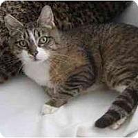 Adopt A Pet :: Sandra - Portland, OR