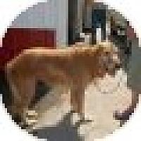 Adopt A Pet :: Janie - Denver, CO