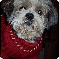 Adopt A Pet :: Tango - Mays Landing, NJ