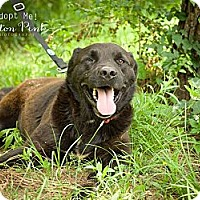 Adopt A Pet :: Ben - Fort Valley, GA