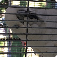 Adopt A Pet :: Reggie - Punta Gorda, FL