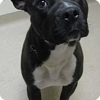 Adopt A Pet :: Marco - Gary, IN