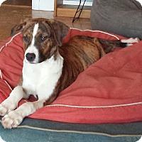 Adopt A Pet :: Ms. Pepper - Orange Lake, FL