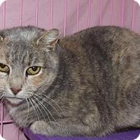 Adopt A Pet :: Cher - Orleans, VT