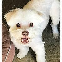 Adopt A Pet :: Baby 3 - Los Alamitos, CA
