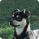Adopt A Pet :: Fern