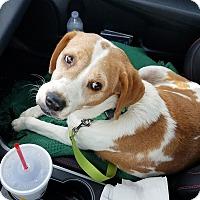Adopt A Pet :: Dasiy - Hopkinsville, KY