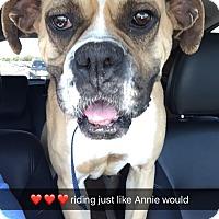 Adopt A Pet :: Anna Banana - Austin, TX