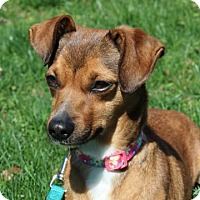 Adopt A Pet :: MISSY JO - Norfolk, VA