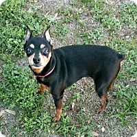 Adopt A Pet :: Zoey - Mary Esther, FL