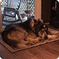 Adopt A Pet :: DRAGO - McCurtain, OK