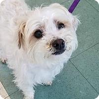 Adopt A Pet :: April - Sunnyvale, CA